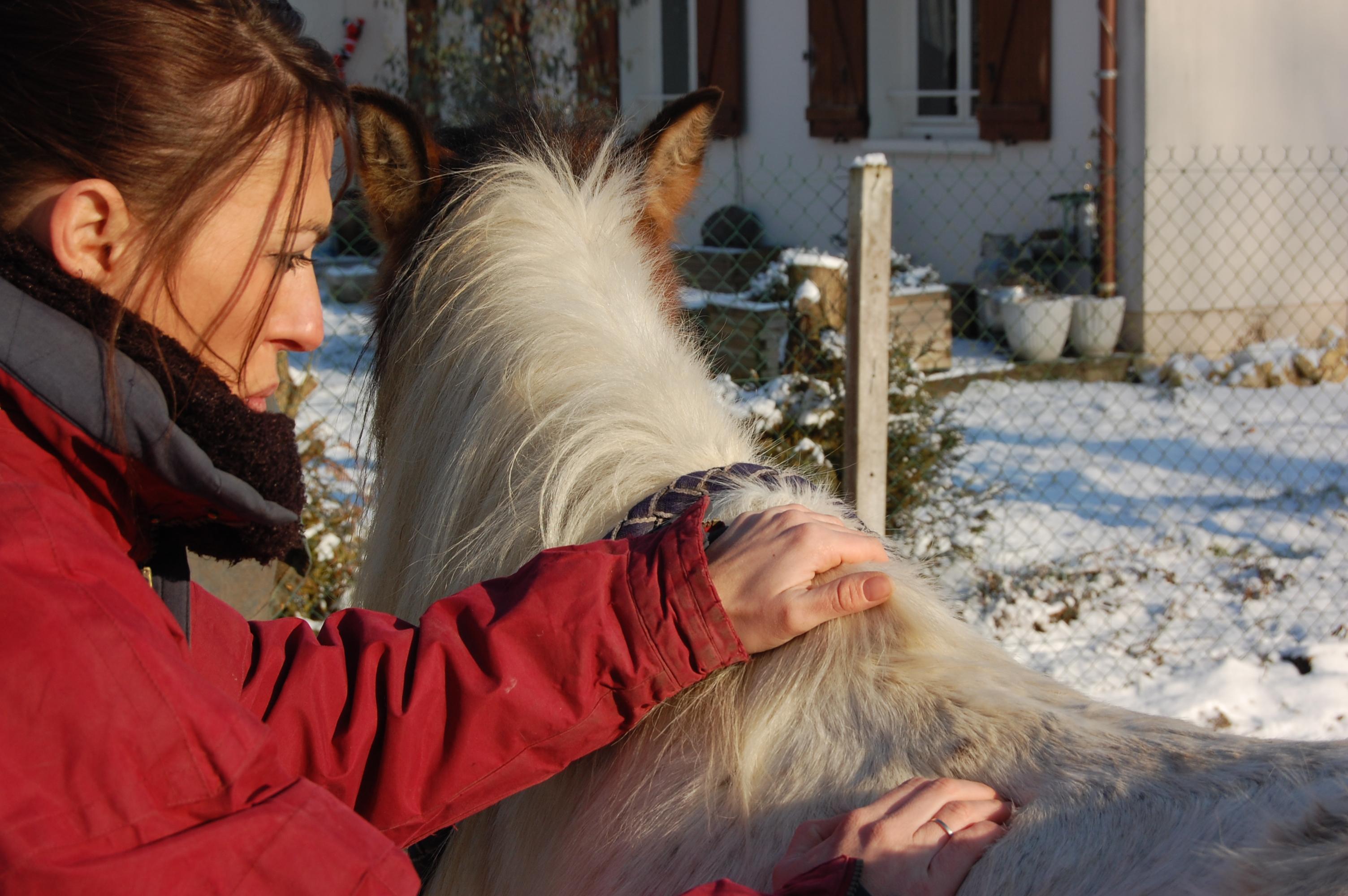 shiatsu equin cheval poney