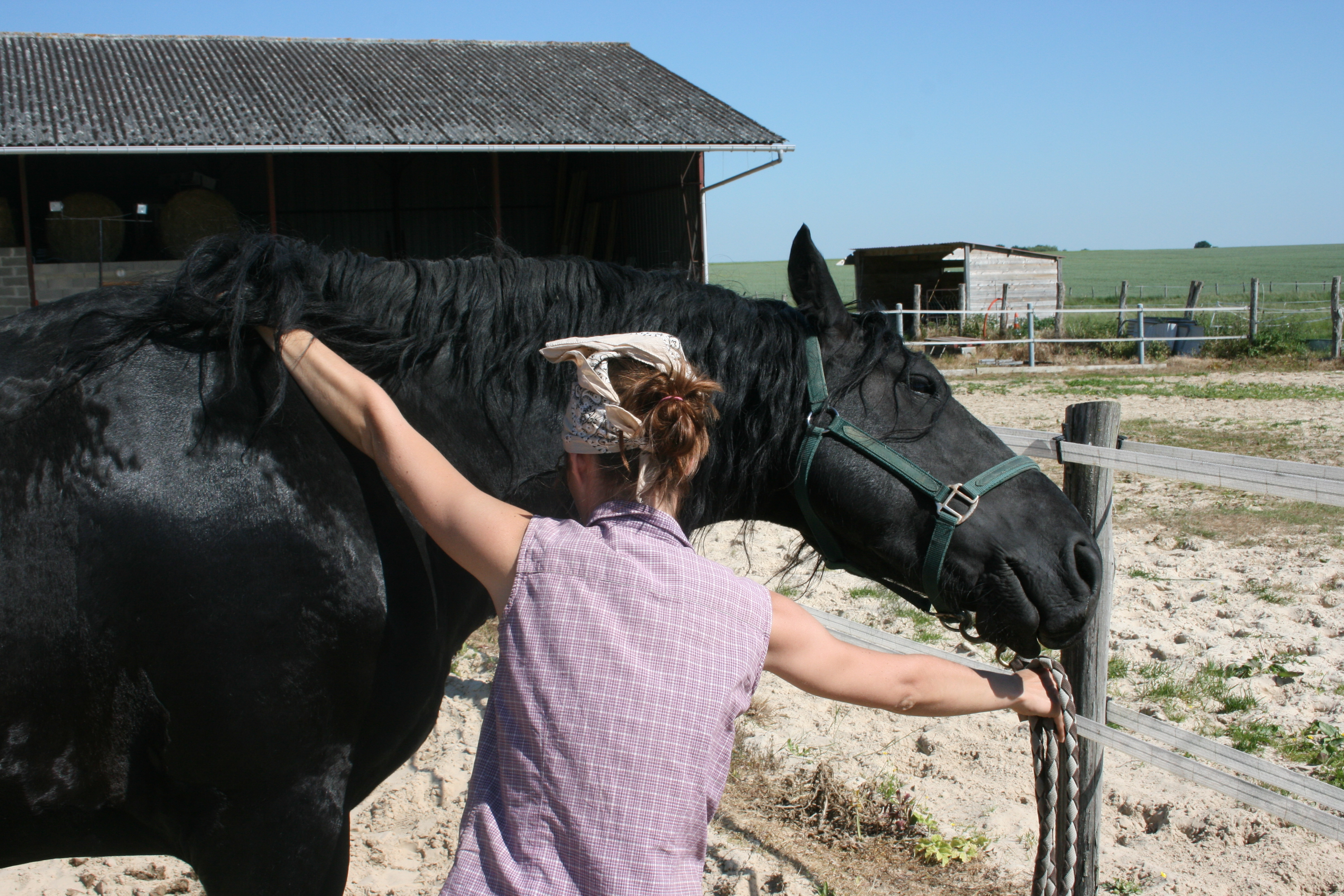 shiatsu frison cheval