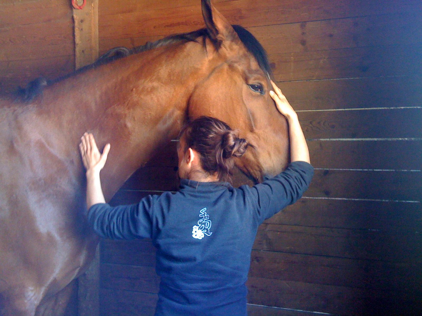 shiatsu equin cheval voltige